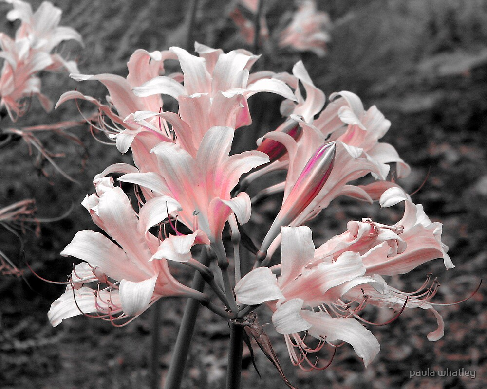 pretty in pink by paula whatley