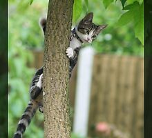 Tree Climbing by brandham2007