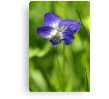 Wild Violet Canvas Print