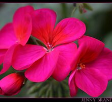 Pink Flower by brandham2007