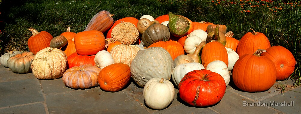 Panorama of Pumpkins & Gourds by Brandon Marshall