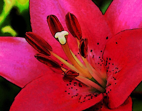 Hot Lily by LindaLou1952
