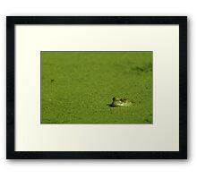 Bullfrog and Algae Framed Print