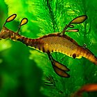 Leafy Sea Dragon by Sandra Anderson
