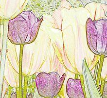 Tulip Garden IV by cshphotos