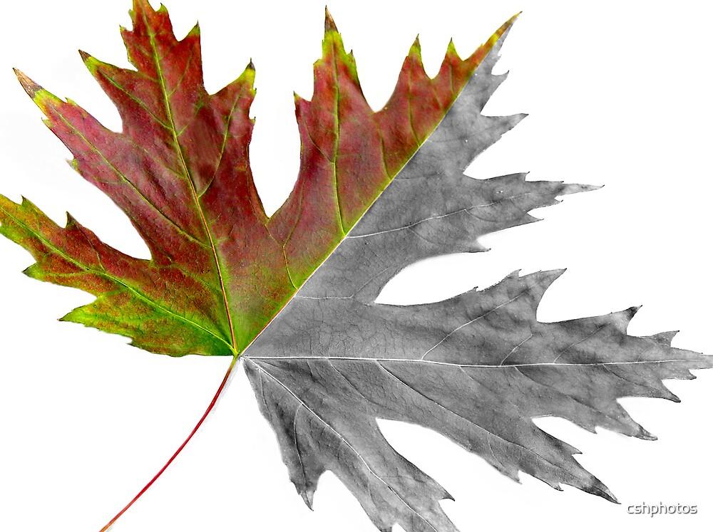 Seasonal Leaf by cshphotos