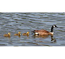 Mother and Three Babies Photographic Print