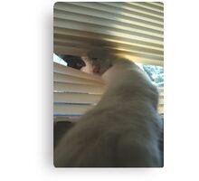 Cat 4741 Canvas Print
