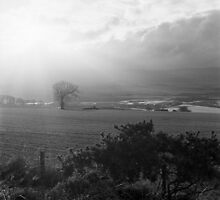 Crepuscular Rays, Foreteviot by Tim Haynes