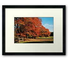 Flame Trees Framed Print