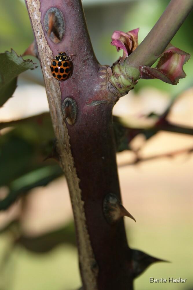 Ladybug by Bente Hasler