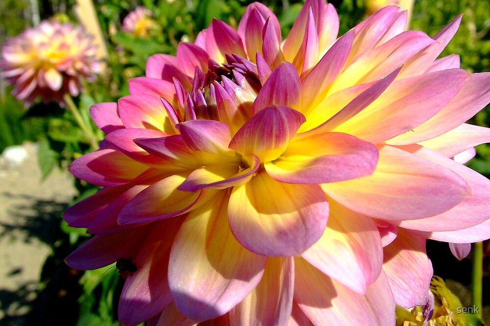 pink flower by senk