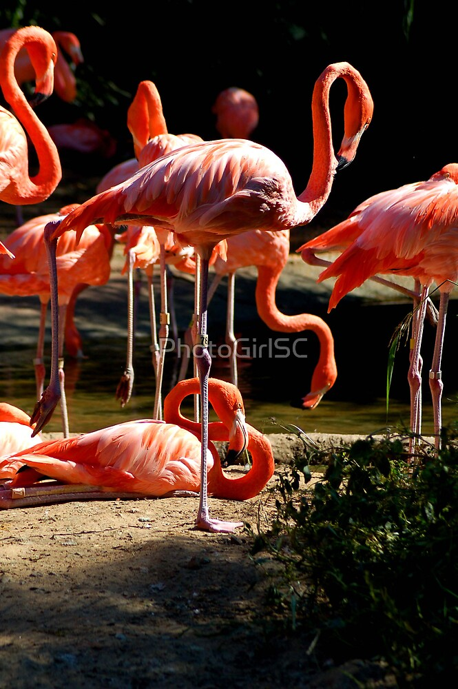 Flamingo by Bjana Hoey