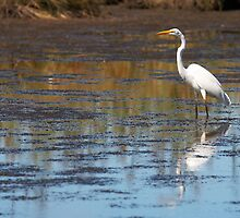 egret by GJdisplay