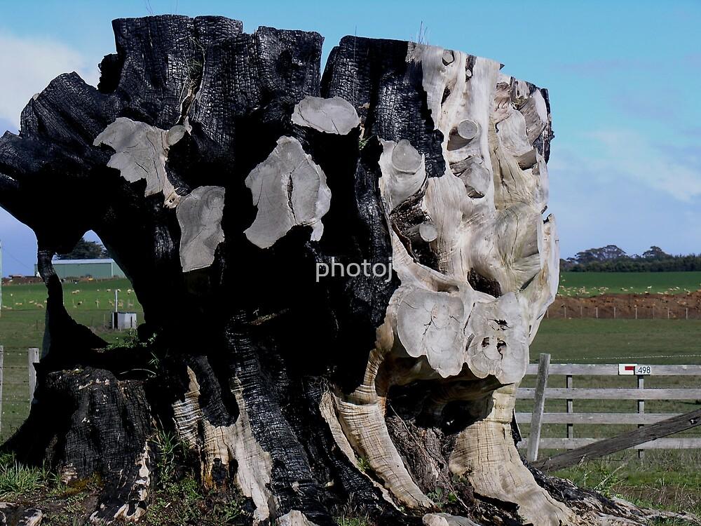 Tree Stump by photoj