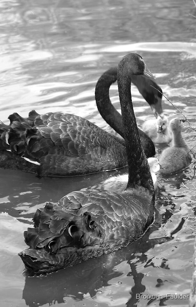 Black Swans by Bronwyn  Faulder