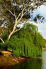 Murray River at Albury by Darren Stones
