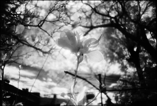 Backyard beauty 2 by Juilee  Pryor