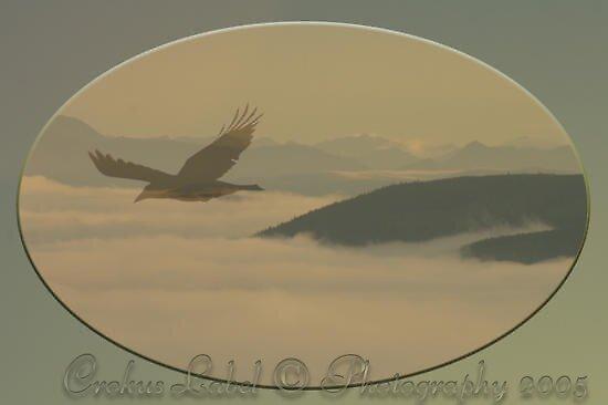 Raven Sky by Crokuslabel