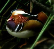 Sleepy Duck by Margot Kiesskalt