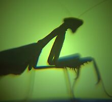 Praying Mantis  by Gwenda  Harvey
