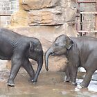 Baby Elephants Washing by John Gilluley