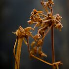 Dead Flowers in close up by Cooper