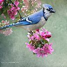bluejay on spring blossoms by R Christopher  Vest