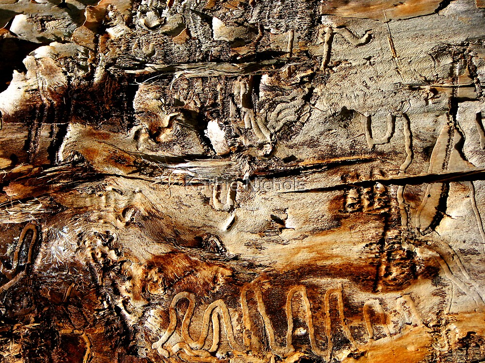Tapestry in Bark by Kathie Nichols