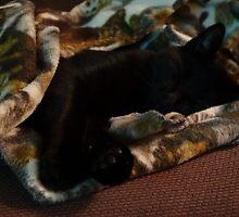 sleeping cat by frogs123
