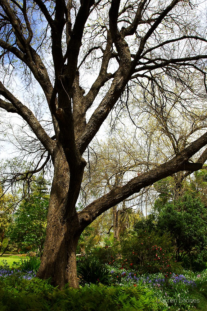 Albury Botanic Gardens by Darren Stones