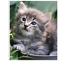 aint I cute ! Photographic Print