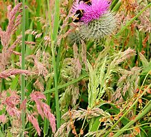 Thistle and Bumblebees, Cullicudden, Black Isle by Karen Thorburn