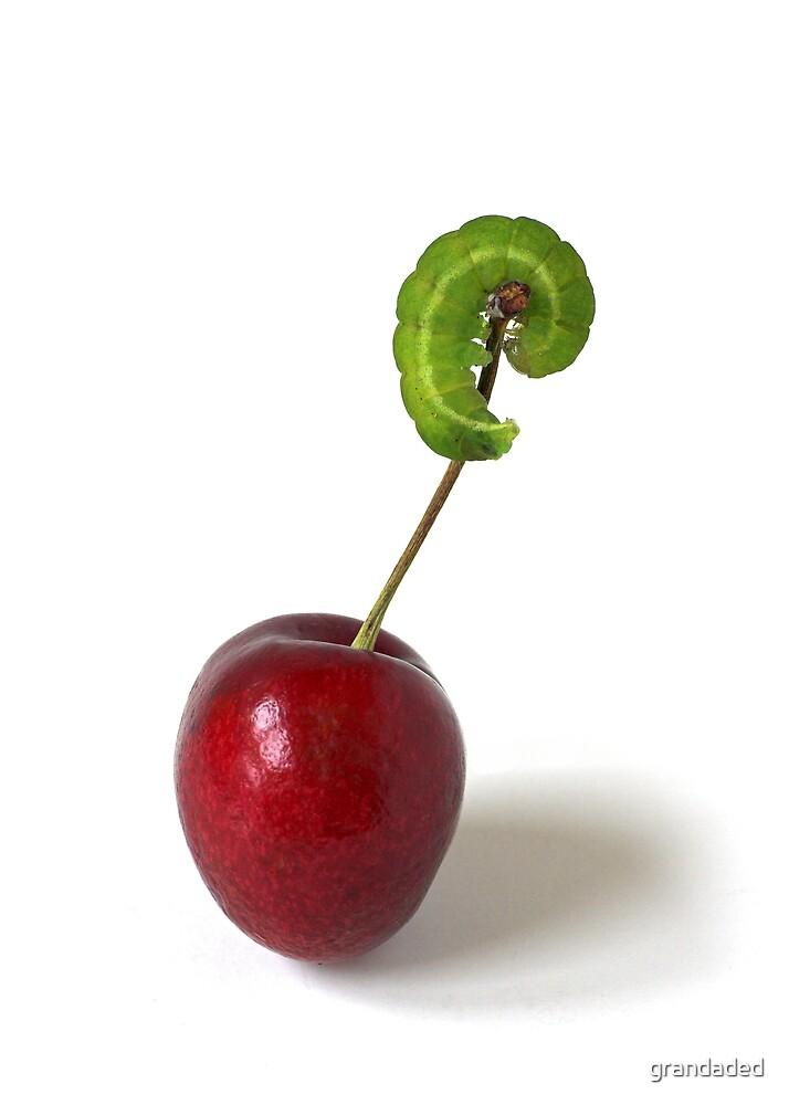Green Caterpillar by grandaded