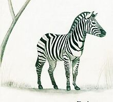 Zebra in Pencil by Deborah Duvall