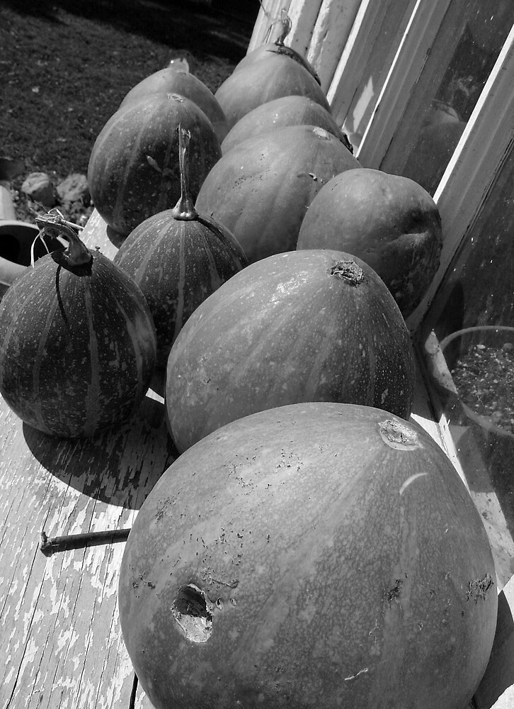~Gourds~ by Susy Rushing