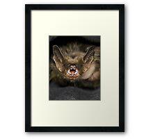 40g of fury Framed Print