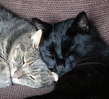 Sleeping cats by frogs123