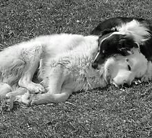 Buddies by Susy Rushing