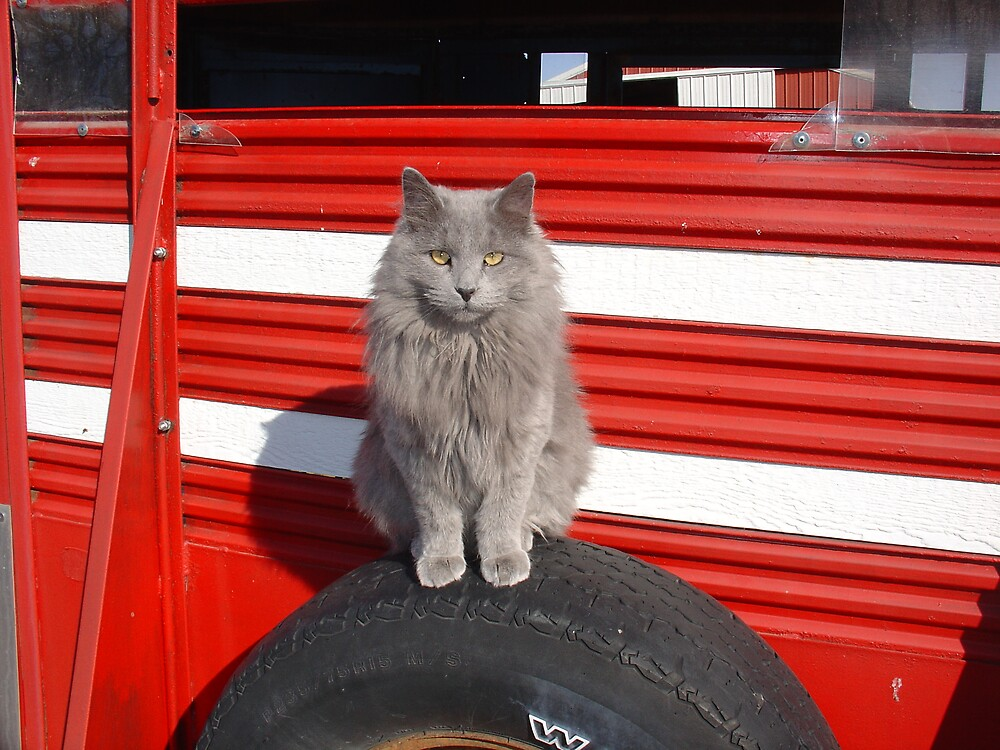 Farm Cat by Susy Rushing