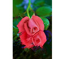 Rose in Reflection Photographic Print