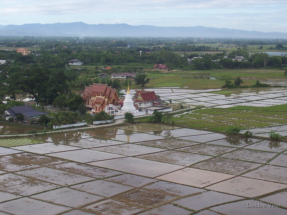 Temple and Paddy Fields by Debbie Vine