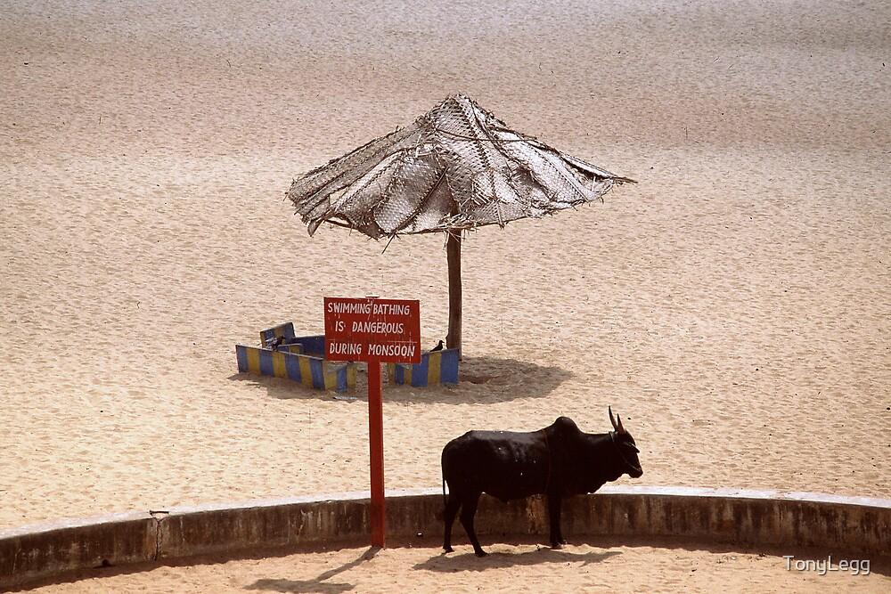 No bathing during monsoon  by TonyLegg