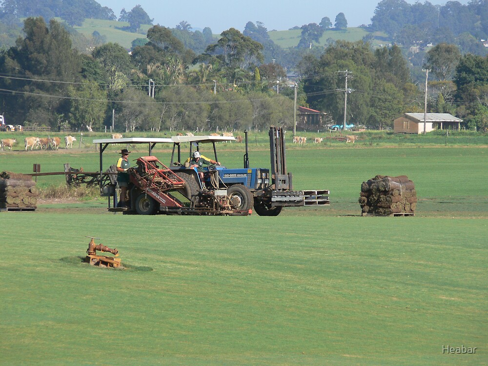 Harvesting the Turf. by Heabar