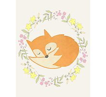 Sleepy Little Fox / Sleeping Fox Photographic Print