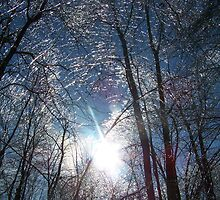this is a winter scenery picture by JlAndrews