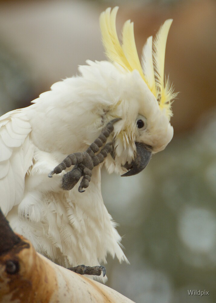 A Few Feathers Short by Wildpix