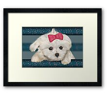 Cute Maltese Dog with Creme Fur and Red Ribbon Framed Print