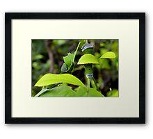 Curious Caterpillar Framed Print