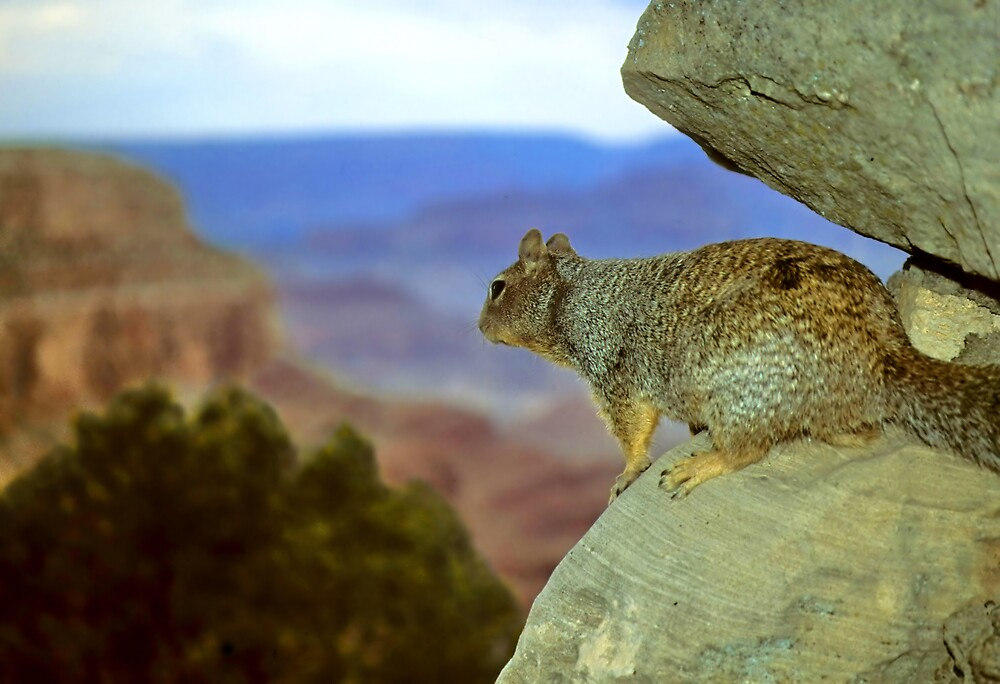 Squirrel with a View by Jonathan Cohen